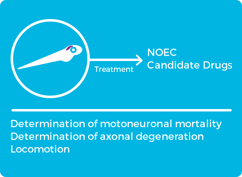Alzheimer models: motoneural mortality, axonal degeneration, locomotion