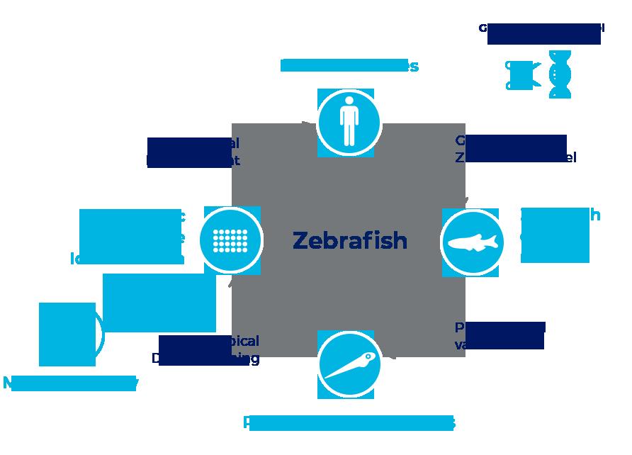 Human diseases modeling - ZeClinics ZeGenesis Schema