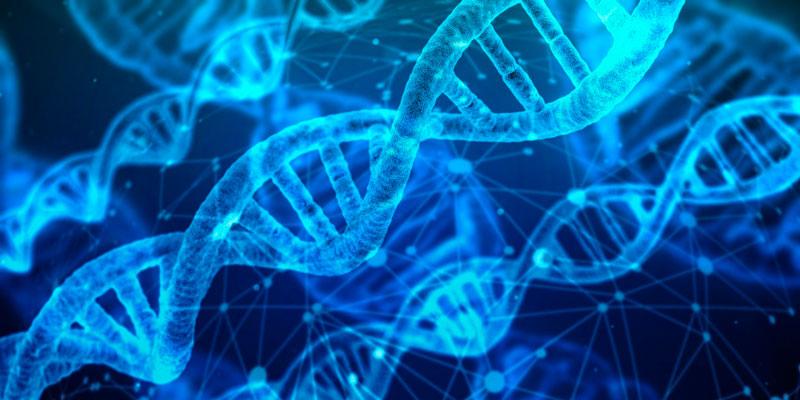 zebrafish-genome